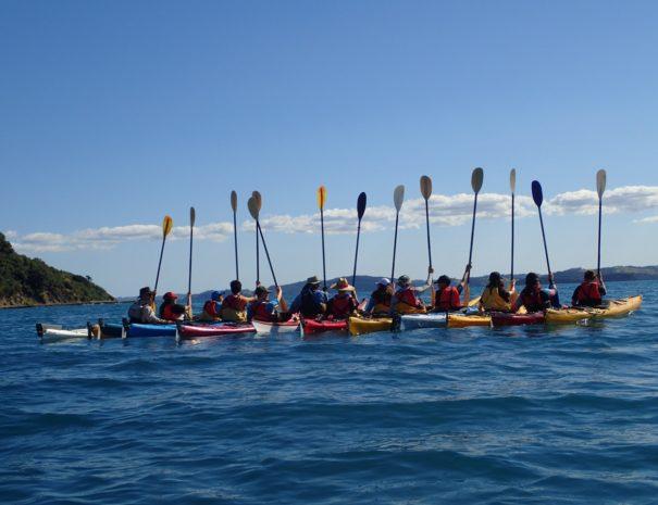 Bay of Islands Group Kayak Tours